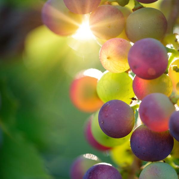 Alkaliserende basenvormende voeding basenoverschot hoge pH-waarde